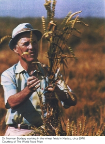 Norman Borlaug wheat