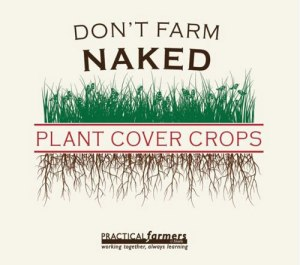 don't farm naked plant cover crops